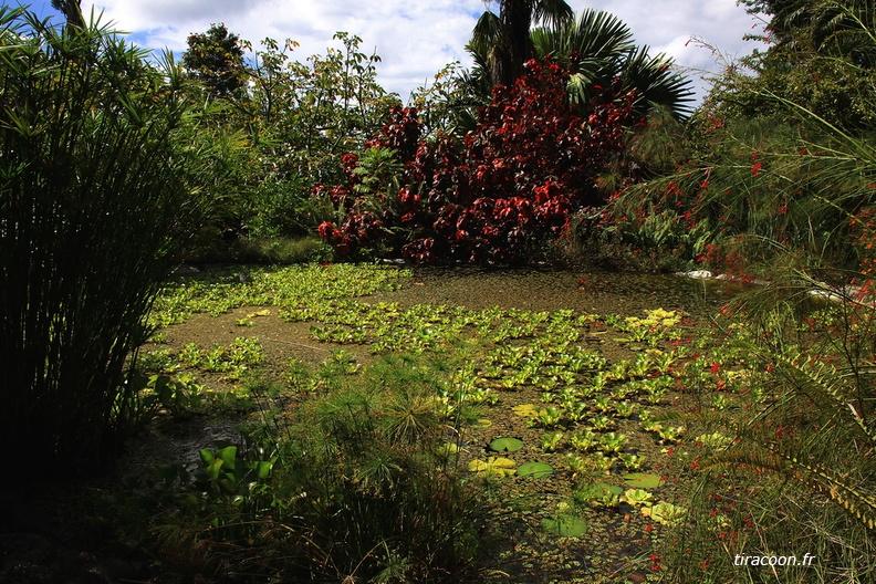 Bassin - Grand bassin de jardin ...